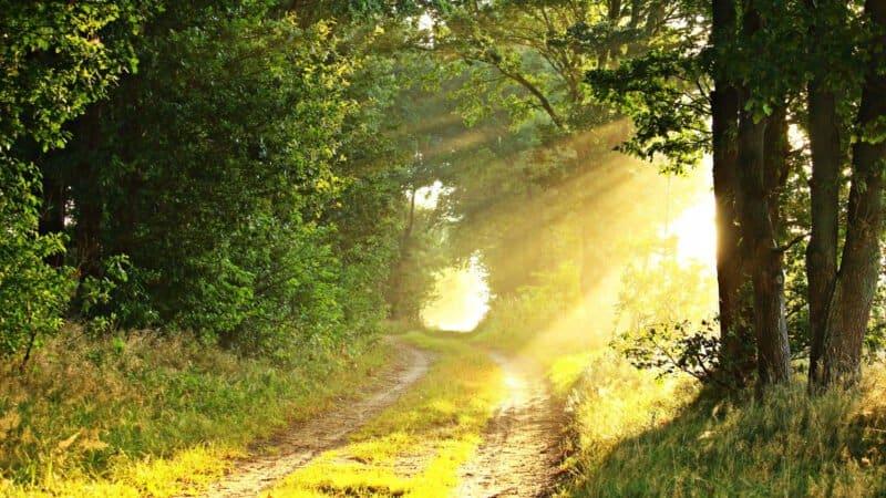The New Road – Sermon – 26 April 2020
